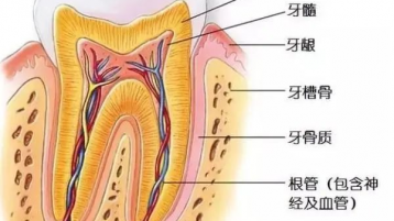 中山牙科医院:牙齿变黄,你知道是什么原因吗?